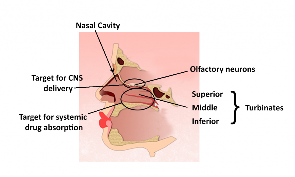 Nasal Delivery of Therapeutics and Vaccines